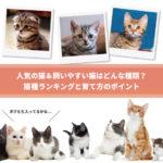 人気の猫&飼いやすい猫はどんな種類?猫種ランキングと育て方のポイントを徹底解説