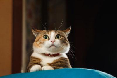 猫が軟便・下痢になる原因は?