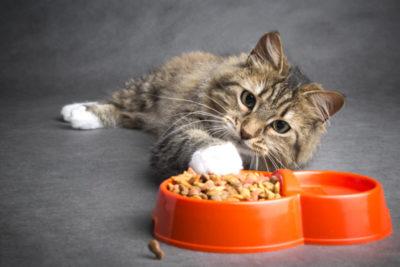 高齢猫がキャットフードを食べない時はどうすれば良い?