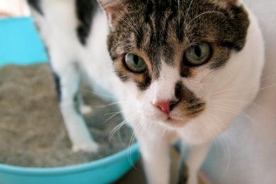 原因は小腸・大腸どっち?猫の軟便・下痢の症状表