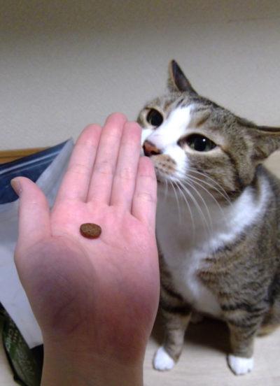 愛猫によるカナガンの食いつき検証
