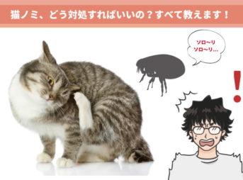 絶対につぶさないこと!猫ノミの症状と安全な駆除方法を動物看護師が解説します