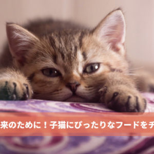成長期を支える大事な食事!子猫に最適なキャットフード4選と選び方のポイント
