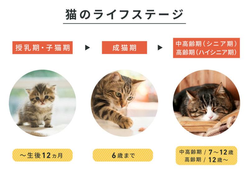 猫のライフステージ