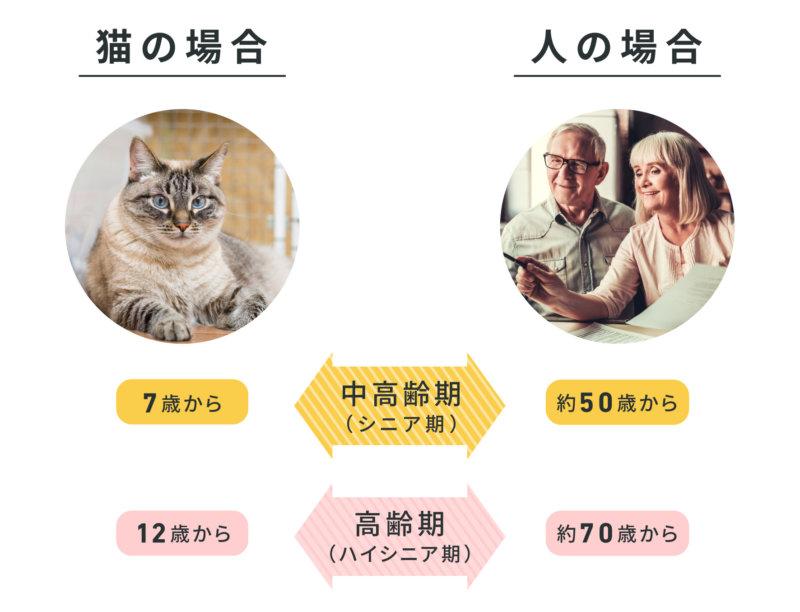 猫と人のシニア・ハイシニアの比較表