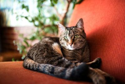 7~12歳までのシニア期に適した成分を分析!高齢猫におすすめの厳選キャットフード