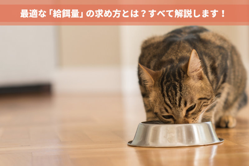 3つのSTEPで計算可能!最適な猫の「給餌量」を導き出すための全知識